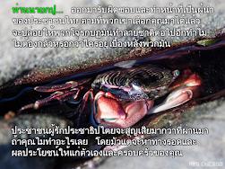ท่านนายกปู… ออกมารับผิดชอบและทำหน้าที่เป็นผู้นำของประชาชนไทยตามที่พวกเขาเลือกคุณมาได้แล้ว